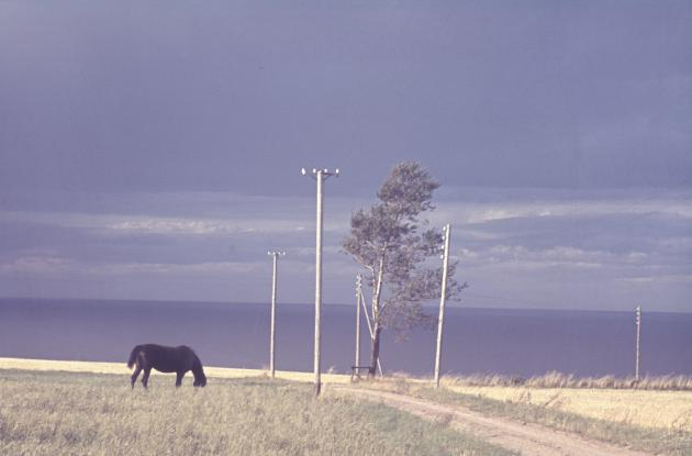 Older photo of horse in field